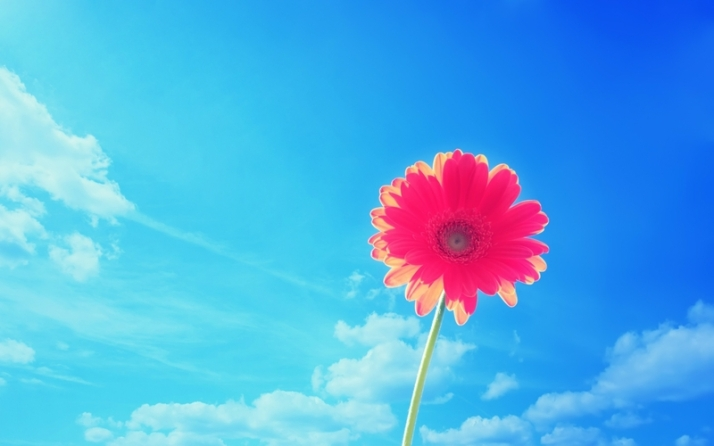 http://www.hdwallpapersinn.com/blue-sky-daisies-wallpapers.html