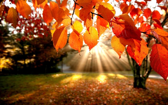 autumn-leaf-autumn-beautiful-nature-wallpapers1